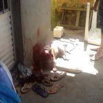 O pit bull na casa de Renan (Foto: Divulgação)