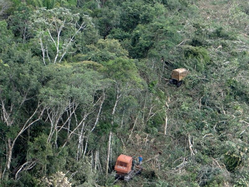 ibama desmatamento