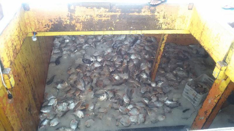 Quase uma tonelada e meia de peixe foi apreendida e encaminhada a instituições de caridade (Foto: Divulgação/PC)
