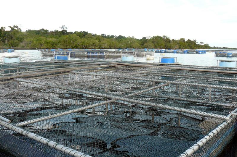 Amazonas atual federa o da agricultura e pecu ria for Piscicultura en tanques plasticos