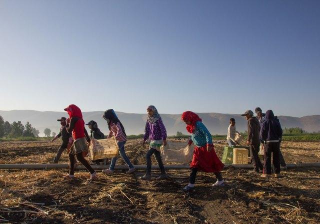 Criança Siria Trabalho Foto Reprodução ILO
