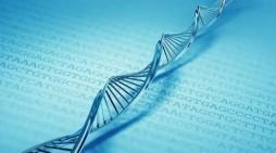 Reino Unido aprova técnica de manipulação de genes em embriões