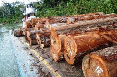 Extração ilegal de madeira é um crime combatido pelo Ibama (Foto: Divulgação)