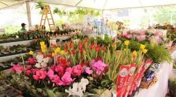 Manaus recebe pela primeira vez o Festival das Flores de Holambra