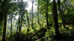 Desmatamento e outras intervenções humanas na floresta prejudicam a readaptação (Foto: Greenpeace/Divulgação)