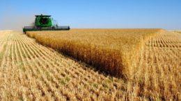 Agronegócio sustenta as exportações brasileiras, enquanto país é fechado às importações (Foto: Sindicamp/Divulgação)