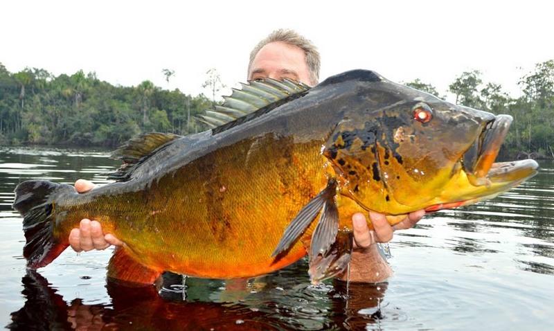 Emissão de carteira para pesca esportiva aumenta 389% no Amazonas