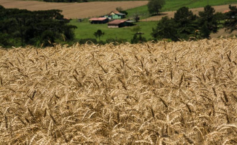 Agropecuária avança no Pará e em Mato Grosso, mas recua no Nordeste