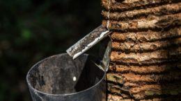 borracha-amazonia
