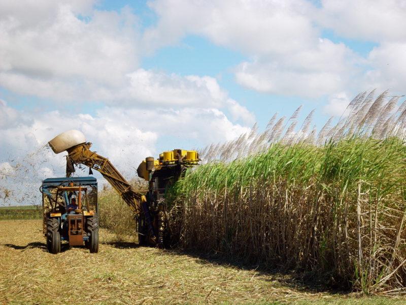 Ambientalistas repudiam cultivo de cana na Amazônia proposto em projeto de lei