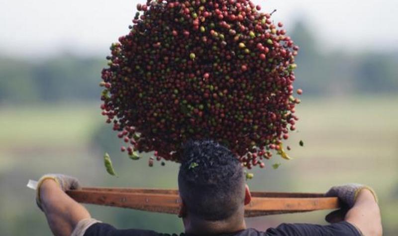 Produtores de café querem acordo com UE para expandir mercado