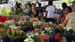 Flores Holambra (Foto: Márcio James/Semcom)