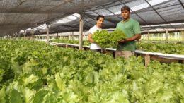 Agricultura familiar (Foto: Aristides Araújo/Secom-RO/Divulgação)