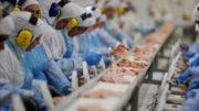 Fiscalização em frigoríficos e fazendas concluiu que controle sanitário é insatisfatório (Foto: Agência Brasil)
