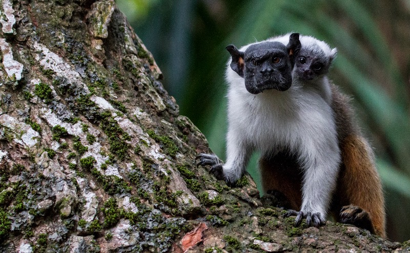 Manaus participa de desafio mundial para divulgar natureza nas cidades