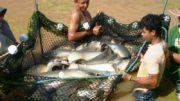 Peixe Sepror (Foto: Sepror/Divulgação)