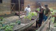 Planta medicinal Fapeam (Foto: Fapeam/Divulgação)
