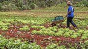 Agricultura (Foto: Sergio Amaral/MDSA)