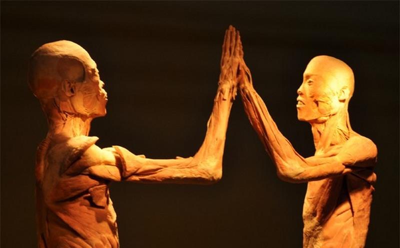 Corpo humano (Foto: Divulgação)