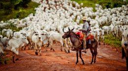 Criadores de gado se unem para reativar frigoríficos em Mato Grosso (Foto: Mayke Toscano/Secom-MT)