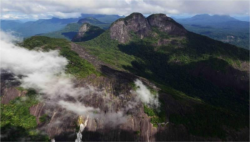 Expedição a Apiaú, em Roraima, revela uma nova floresta amazônica
