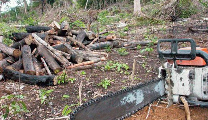 Avanço do desmatamento na Amazônia chegou a 6 mil quilômetros quadrados em 2015 e 8 mil km² em 2016 (Foto: ABr/Agência Brasil)