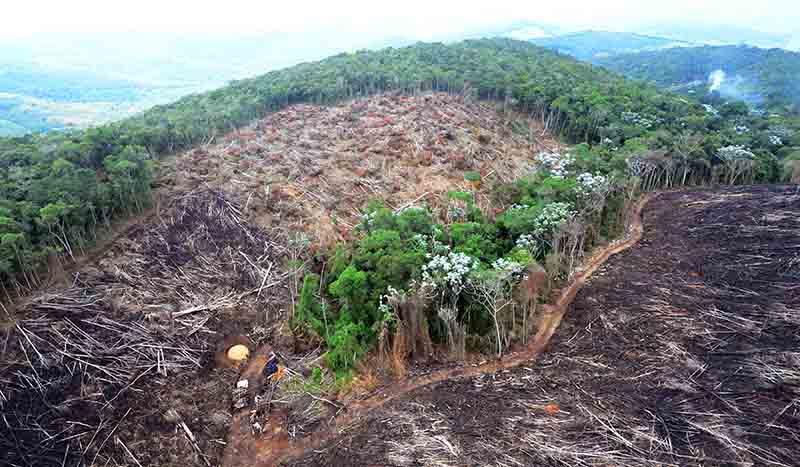 Liberação de recursos está condicionado a meta de redução de desmatamento da floresta (Foto: Welington Pedro de Oliveira/Fotos Públicas)