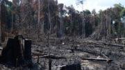 Desmatamento na Amazônia subiu quase 60% em dois anos (Foto: ABr/Agência Brasil)