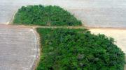 Incra fará uma cotação de valores de terra nua com base nos valores da reforma agrária (Foto: Pedro biondi/Agência Brasil)
