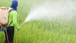 Aplicação de agrotóxicos depende da liberação de produtos químicos pelo governo (Foto: Embrapa/Divulgação)