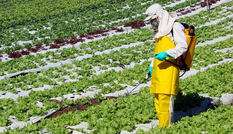 Uso de agrotóxico na produção de alimentos é uma das causas de contaminação e mortes (Foto: Divulgação)