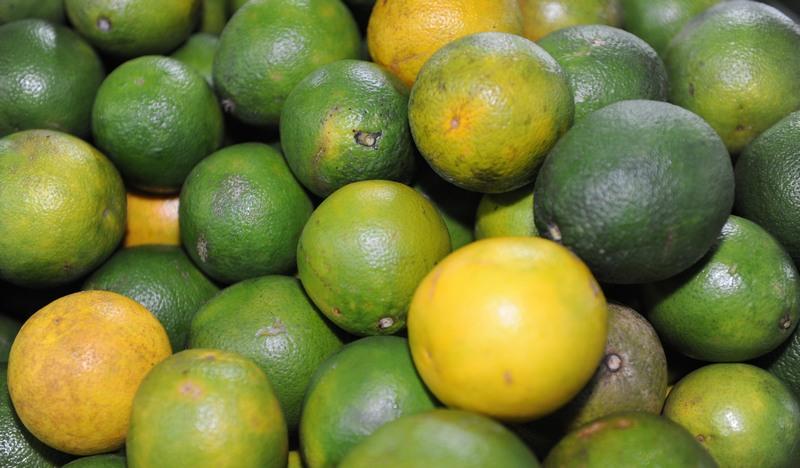 Cinco municípios concentram a produção de cítricos no Amazonas e podem continuar exportando para outros Estados (Foto: Sepror/Divulgação)