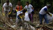 Voluntários participam de trabalho de limpeza de margens de igarapés em Manaus (Foto: Altemar Alcântara/Semcom)