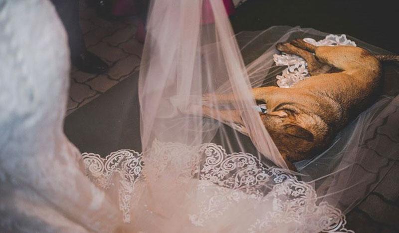 Noiva e cachorro