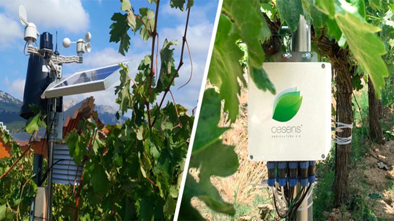 Sensores controlam temperatura na lavoura e ajudam a melhorar produção de alimentos (Foto: Divulgação)