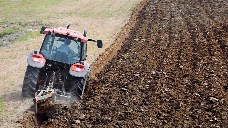 Embrapa pesquisa nova tecnologia para produzir em solo pedregoso (Foto: Embrapa/Divulgação)