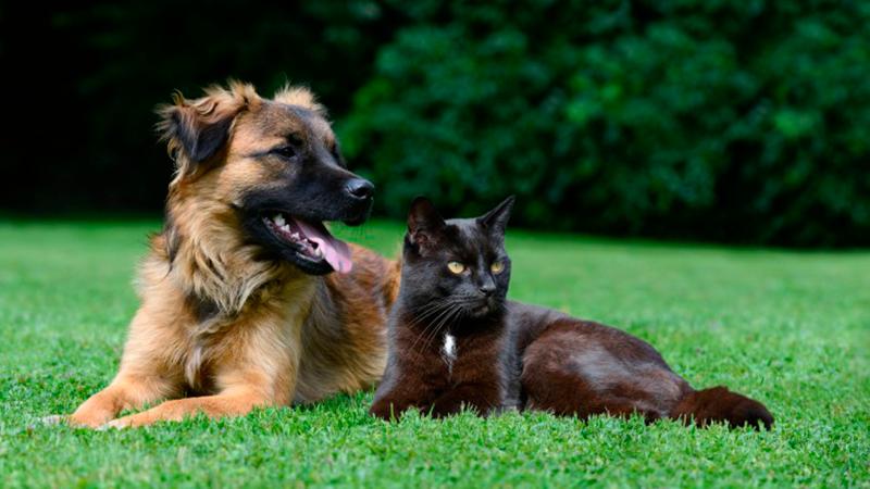Reino Unido proíbe venda de filhotes de cães e gatos em pet shops