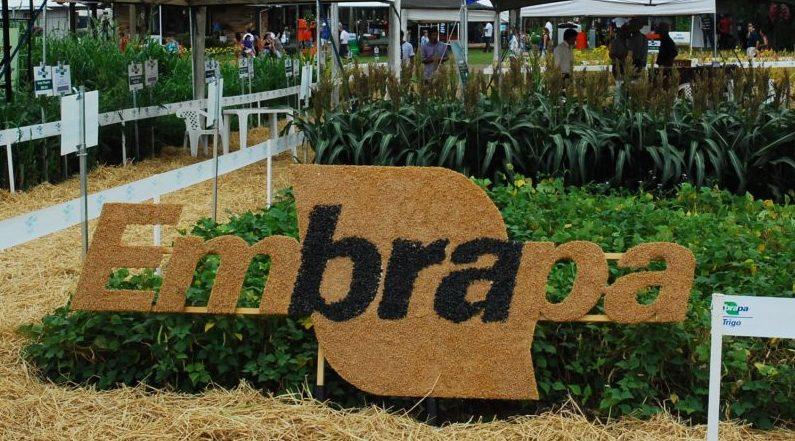 Substituição no comando da Embrapa gera polêmica entre empresários