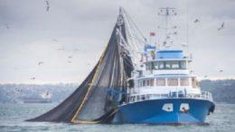 Governo brasileiro diz que até maio, as primeiras embarcações de pesca poderão exportar o pescado (Foto: Ibrahim Taylan/Ministério da Agricultura)
