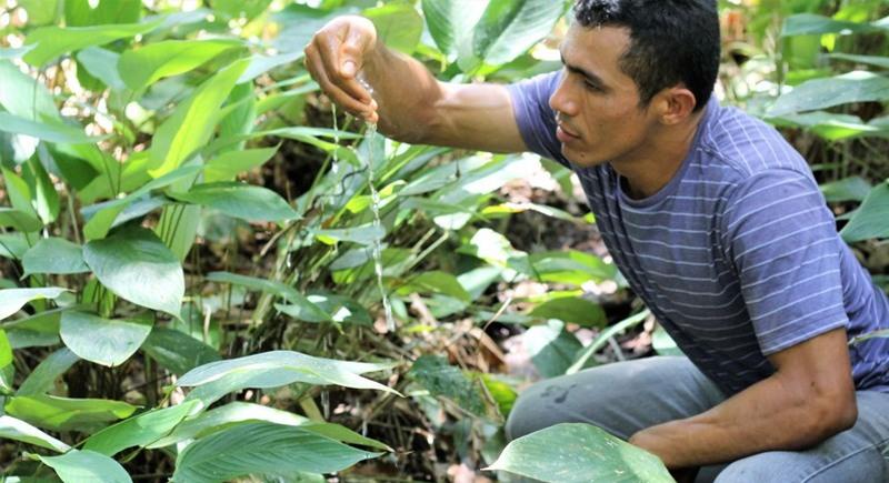 Água limpa na nascente do Igarapé do Quarenta: proteção ambiental garante preservação (Foto: Valter Calheiros)