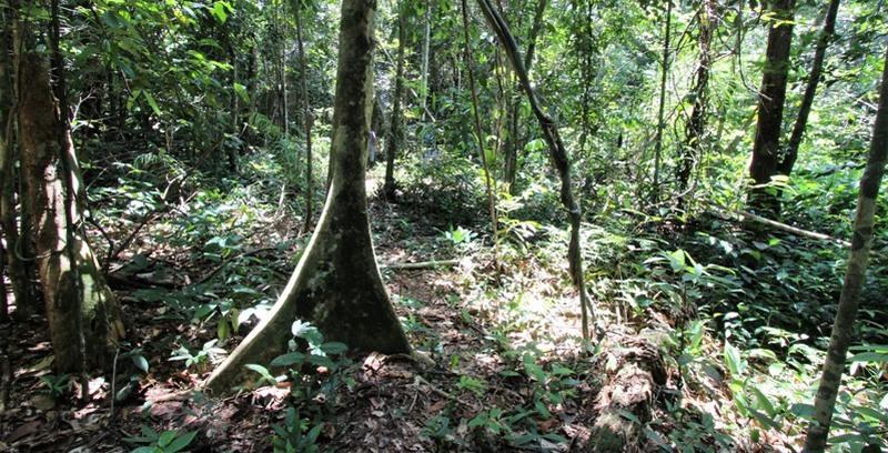 Mata Nativa preservada ajuda a proteger nascente de igarapé na zona leste de Manaus (Foto: Valter Calheiros)