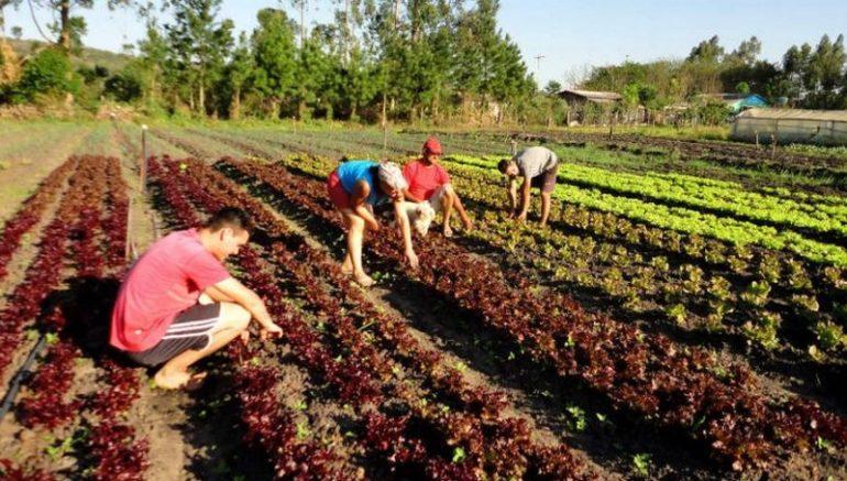 Assentados do Incra receberam títulos definidos de terra e empréstimos para melhorar produção (Foto: Incra/Divulgação)