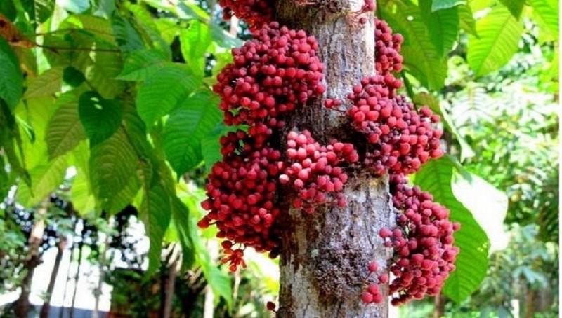 Pesquisador apresenta plantas amazônicas para arborização urbana