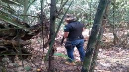 Agentes armados patrulham trilhas em mata no entorno do Compaj, no Km 8 da BR-174 (Foto: Seap-AM/Divulgação)