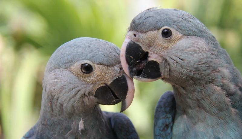 Uma em cada oito aves está ameaça de extinção, revela pesquisa mundial
