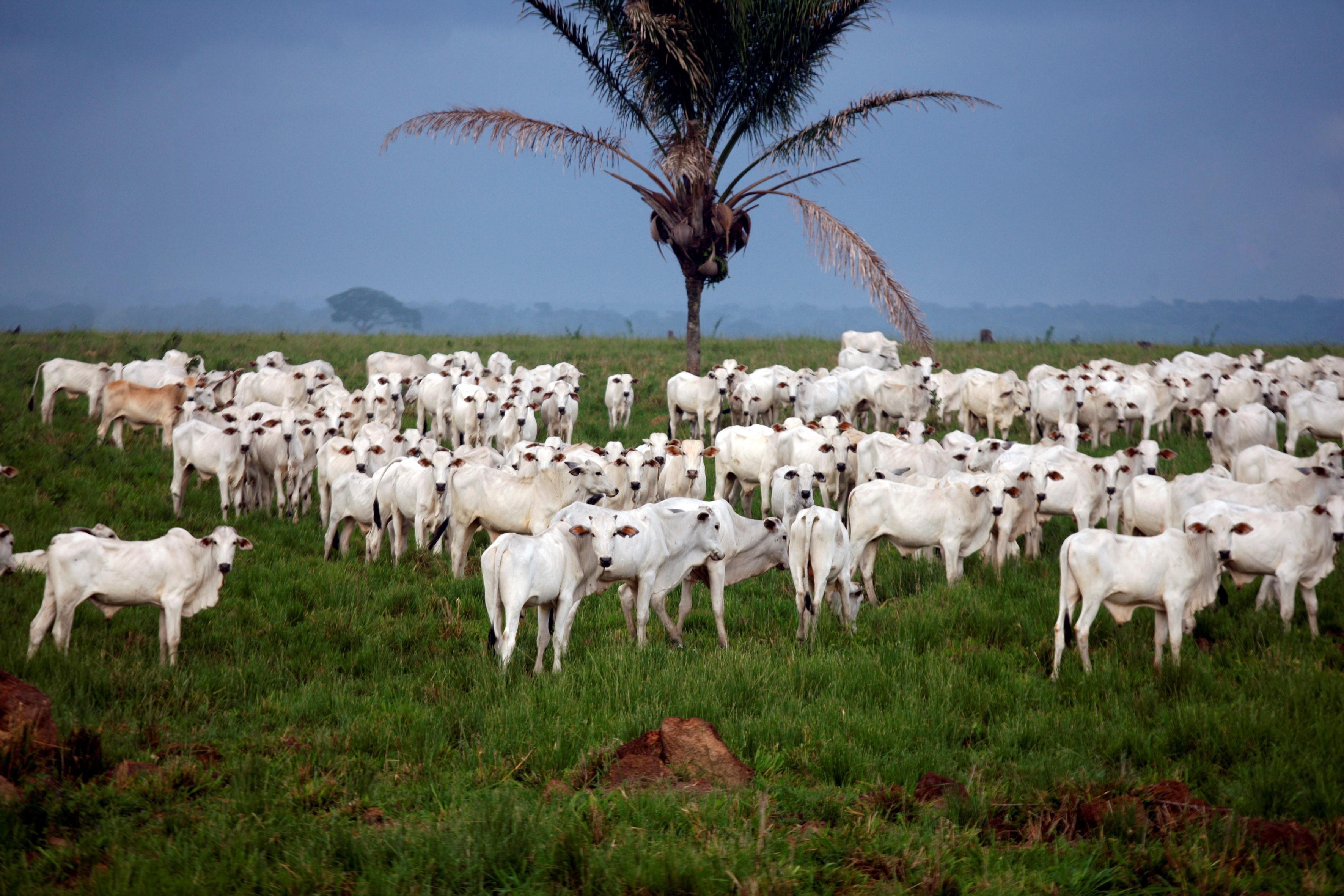 Prejuízos da pecuária com paralisação passam de R$ 3 bi, diz ministro