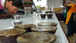 Manaus é sede pela primeira vez de competição de degustação de café