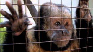 MPF fará audiência pública sobre exploração de animais em atividades turísticas