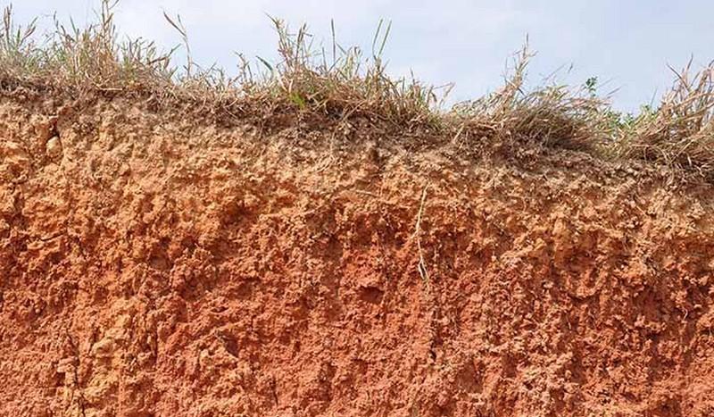 Brasil adicionou 22,8 milhões de toneladas de fósforo em seus solos