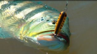 Decreto regulariza pesca esportiva e tucunaré vira símbolo da atividade